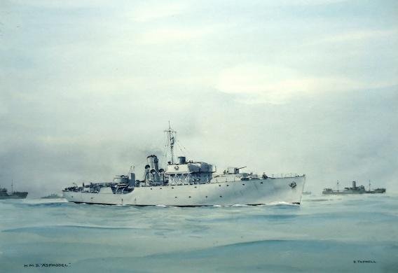HMS ASPHODEL - Flower Class corvette